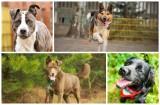 Białystok. Psy do adopcji. Zdobądź oddanego przyjaciela! Te psy z białostockiego schroniska czekają na dom (zdjęcia)