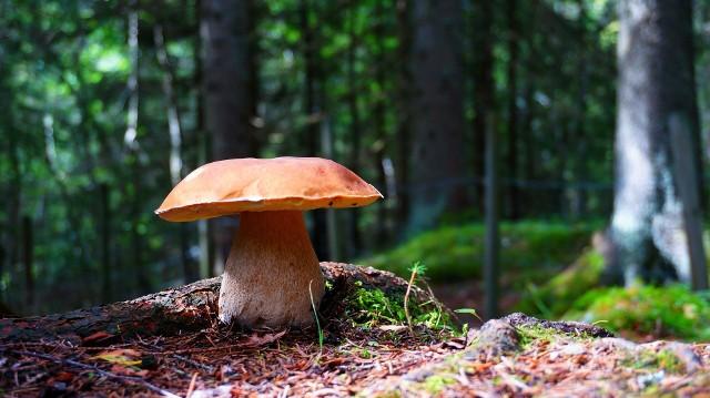 Zróżnicowane możliwości obróbki grzybów pozwalają na wykorzystywanie ich pod różnymi postaciami w wielu potrawach.