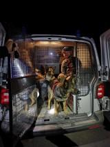 Rzeszowscy ratownicy z psami odnaleźli zaginionego grzybiarza. Uratowali mu życie [ZDJĘCIA Z AKCJI]