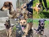 Te psy ze schroniska w Dyminach czekają na dom. Wybierz czworonoga i przygarnij (ZDJĘCIA)