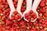 Jak rozpoznać polskie truskawki? Sprawdź, jak odróżnić je od tych importowanych, by cieszyć się smakiem i korzystać z cennych właściwości