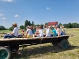 Staropolskie żniwa w Nadbrzeziu! W Sandomierzu odbył się wyjątkowy pokaz pracy rolników (ZDJĘCIA)