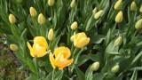 Życzenia na DZIEŃ MATKI 2020. Wzruszające wiersze dla mamy! Złóż mamie piękne życzenia w dniu jej święta, 26 maja. Dzień Matki 2020