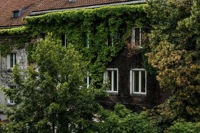 Czy Kraków będzie miał więcej zielonych ścian? Radni są za, prezydent przeciw