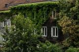 Radni: krakowskie budynki mają mieć zielone ściany. Majchrowski: nie ma na to pieniędzy