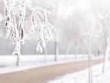 Prognoza pogody, woj. kujawsko-pomorskie - 21.01.2015. Odrobina śniegu, trochę roztopów i szaruga. Na słońce musimy poczekać... do poniedziałku