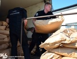 Nielegalny tytoń za miliony złotych w powiecie inowrocławskim [zdjęcia]