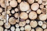 Chełmskiemu ratuszowi grozi 1,5 mln zł kary za wycinkę drzew