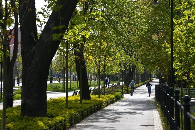 We Wrocławiu planowane jest posadzenie nowych drzew i krzewów. Głównie zasilą one parki i zieleńce, ale wśród podanych przykładowych miejsc widnieją także ulice.Gdzie zrobi się jeszcze bardziej zielono? Zobaczcie na kolejnych slajdach. Możecie na nie przechodzić za pomocą strzałek lub gestów.