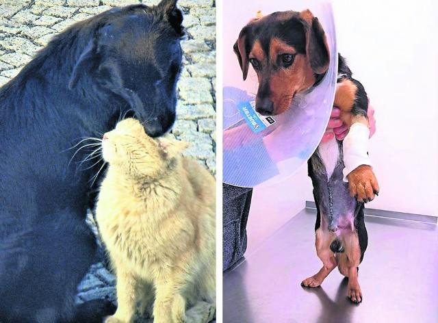 Bobuś (na zdjęciu z kotem) nie przeżył strzałów, Bodo (z prawej) miał więcej szczęścia. Wraca do zdrowia