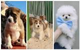 Ile może kosztować pies? Zobaczcie najdroższe czworonogi w województwie podlaskim