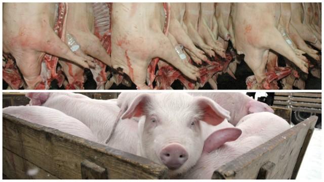 Dużo zakładów mięsnych działało nielegalnie [mamy wyniki ostatnich kontroli]Inspektorzy przeprowadzili łącznie 2 130 kontroli