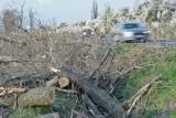 Drogowcy wytną tysiące przydrożnych drzew na Dolnym Śląsku