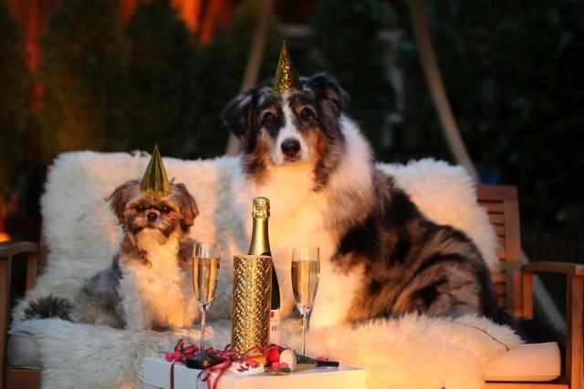Życzenia noworoczne 2019. Zobacz najpiękniejsze życzenia na Nowy Rok 2019!