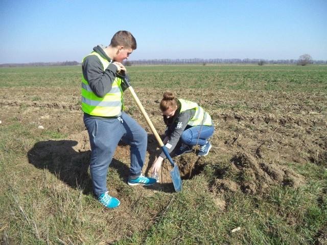 Rolnicy muszą kolejny rok zmagać się z suszą, która niszczy ich plony. W tym roku najprawdopodobniej najgorszą. Dlatego sami także podejmują działania przy wsparciu miejskich urzędników z gminy Grodzisk Wielkopolski, by przeciwdziałać skutkom suszy. Niektórzy pomagają bobrom budować tamy na rowach, inni sadzą drzewa.