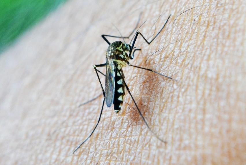 Trzeba bardzo uważać, szczególnie w regionach ciepłych i wilgotnych. Unikać ukąszeń komarów, spać pod moskitierą.