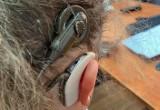 12-letnia Julia ma nowy aparat słuchowy. Dziewczynka zgubiła sprzęt nad morzem, po czym jej matka zmyśliła i zgłosiła na policję kradzież