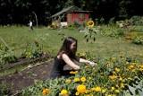 Ogródki działkowe idą w cenę i coraz trudniej je nabyć