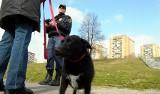 Każdego dnia psy zostawiają 20 ton kup na ulicach Łodzi. Czy łodzianie sprzątają po pupilach?