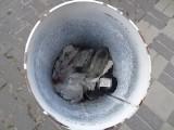 Międzyrzecz. W słupkach parkingowych aż roi się od śmieci! Jak tak można?!