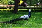 Ogród Saski w Lublinie przyciąga mieszkańców. Zazielenił się i nabrał cudownych barw! Zobacz zdjęcia