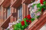 Kwiaty na balkon - słoneczny. To one najpiękniej zakwitną od południowej strony [zdjęcia]