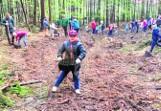 Po rzezi w Górach Opawskich ruszyła akcja sadzenia drzew