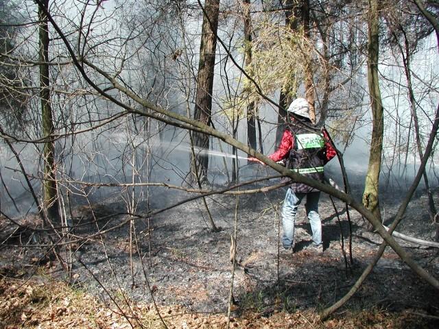 Od trzech lat strażacy i ochotnicy gaszą wiosną i latem pożary lasów w okolicach Olsztyna. Nikt nie ma wątpliwości, że to dzieło tego samego podpalacza. Nagroda ma się przyczynić do jego zatrzymania