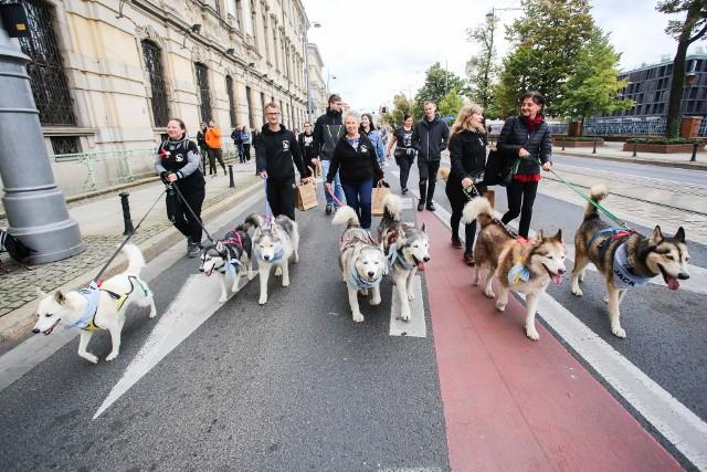 ,,Hau Are You'' to wrocławska parada psów, która trzeci raz przeszła przez miasto