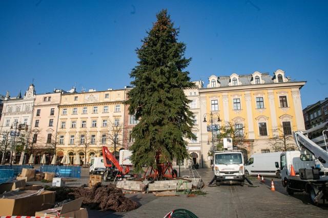 W Krakowie trwają przygotowania do świąt. Na Rynku Głównym stanęła choinka