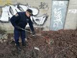 Jenot w Gdyni. Ekopatrol Straży Miejskiej znalazł chore zwierzę w Wielkim Kacku [zdjęcia]