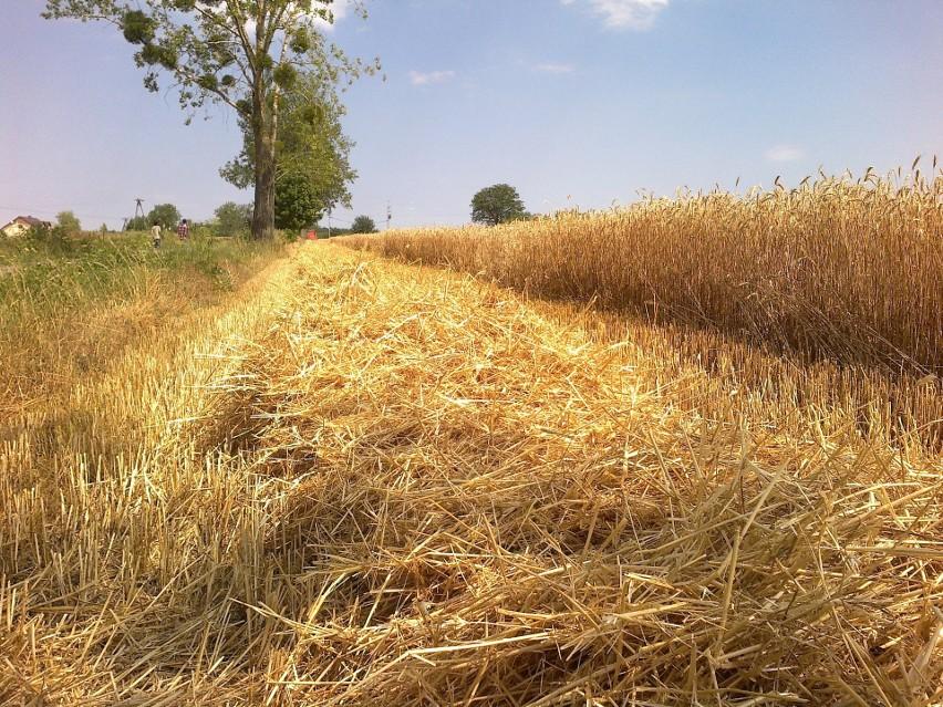 Kres hossy na rynku ziemi rolnej