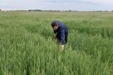eDWIN, czyli rolnictwo przyszłości na naszych oczach