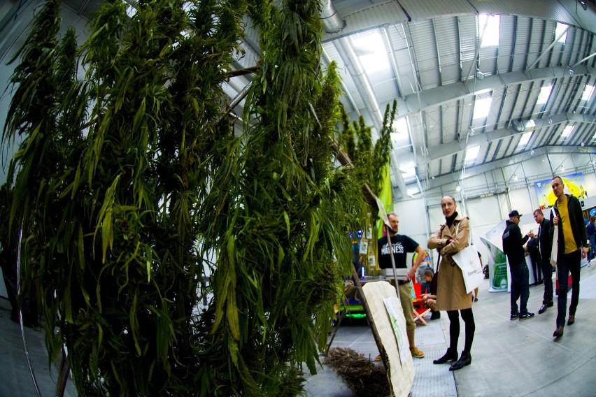 Medyczną marihuaną leczą się w Polsce pacjenci chorzy...