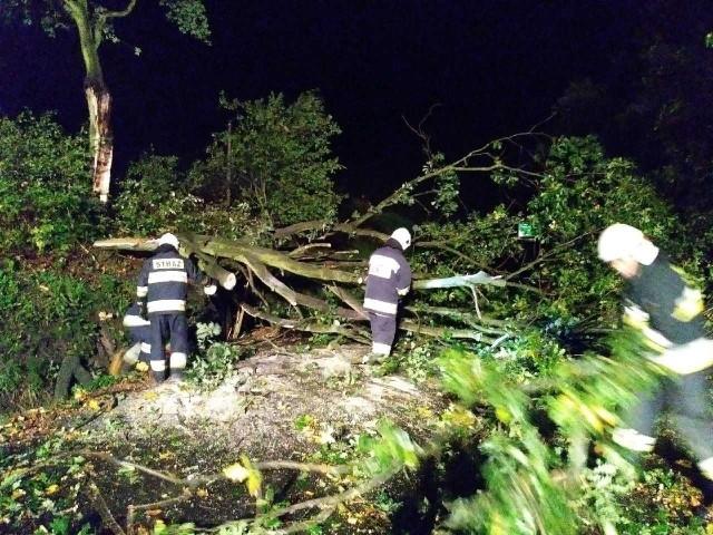 Silny wiatr połamał dziesiątki drzew, strażacy ciągle pracują