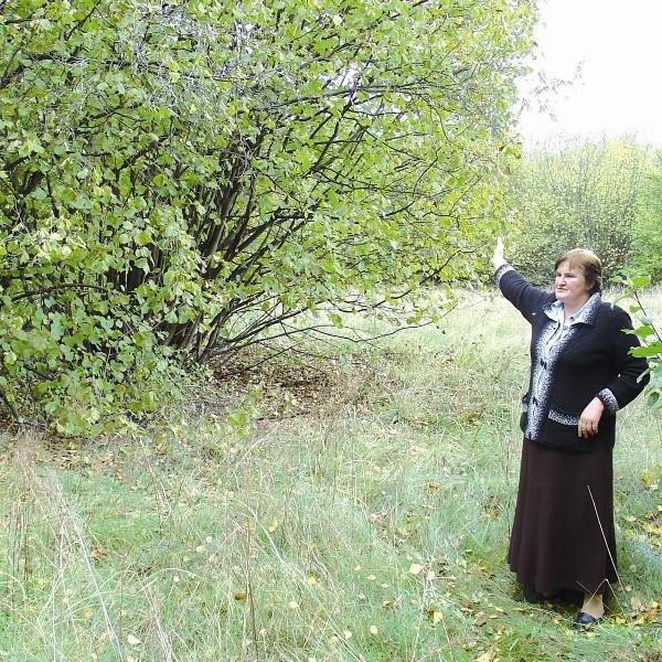 Geodeta gminny pani Guziejko pokazuje, że dawny cmentarz jest porośnięty trawą i krzakami. Trudno znaleźć jakiekolwiek znaki dawnego kirkutu.