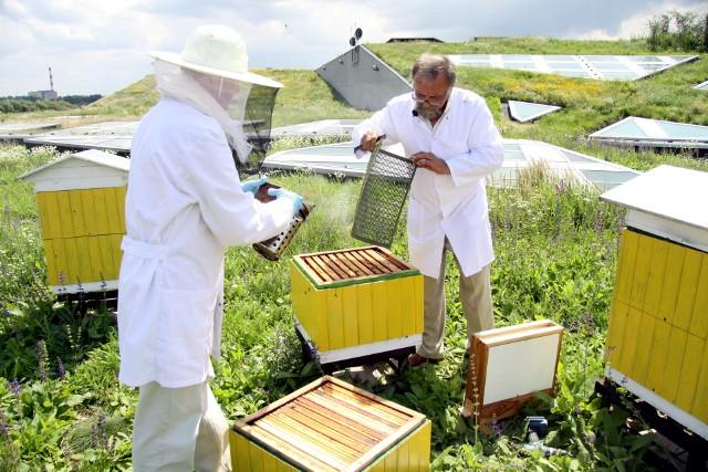 Pszczelarze: - Preparaty dają szansę na przetrwanie pszczół. To absolutna rewelacja!