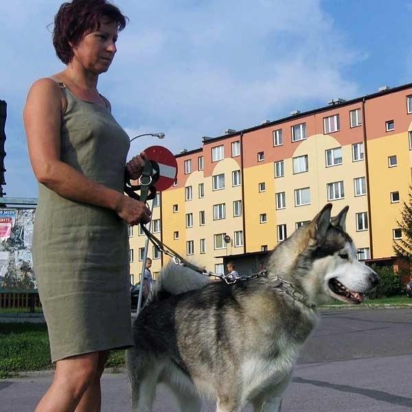 W poniedziałek Aurox, z Ewą Rybczak był na tradycyjnym, wieczornym spacerze. Łasił się do spotkanych po drodze przechodniów.