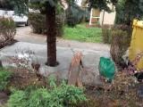 Zabetonowane drzewo w Krakowie. Kolejny poziom absurdu przekroczony