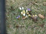 Pabianice. Wiosna przy kościele św. Floriana w Pabianicach ZDJĘCIA