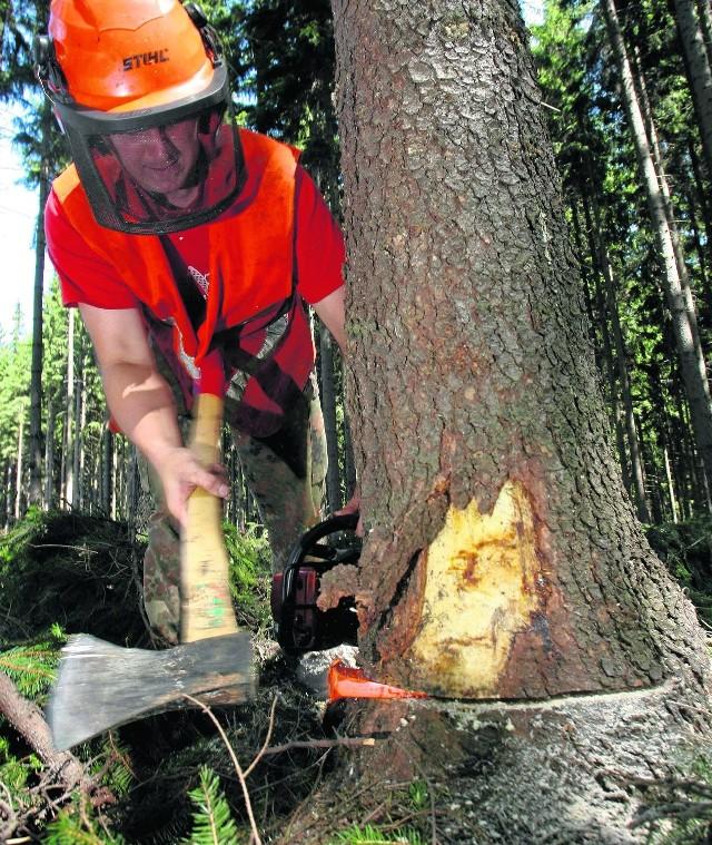 Walka z kornikiem drukarzem cały czas trwa. Najgorzej  było w 2006 r., kiedy wycięto 4 mln m sześc. beskidzkich lasów