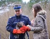 Myszołów uratowany przez gdańskich policjantów na Trasie Sucharskiego, wrócił na łono natury [zdjęcia, wideo]