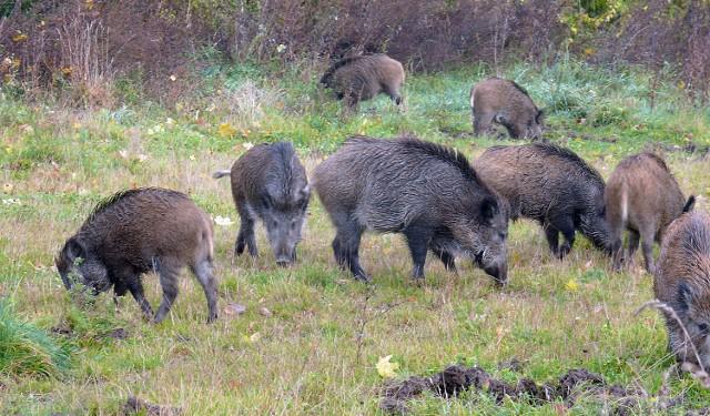 Zwierzęta grudziądzkich lasów