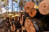 Wojszki. Wypadek podczas wycinki drzew. Mężczyzna poniósł śmierć na miejscu