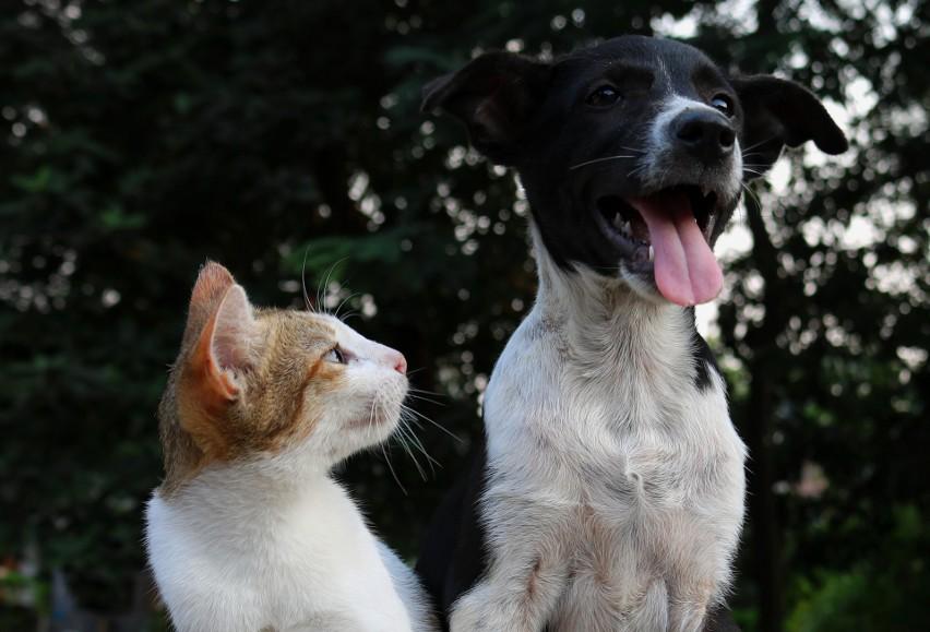 Psy i koty – większość z nas je kocha i nie wyobraża sobie...