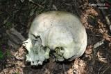 Sosnowiec: czaszka znaleziona w lesie należy do zaginionego 41-latka