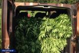 Trójka rodzeństwa skazana za nielegalną uprawę marihuany nie zgadza się z wyrokiem. Chcą uniewinnienia lub łagodniejszych kar