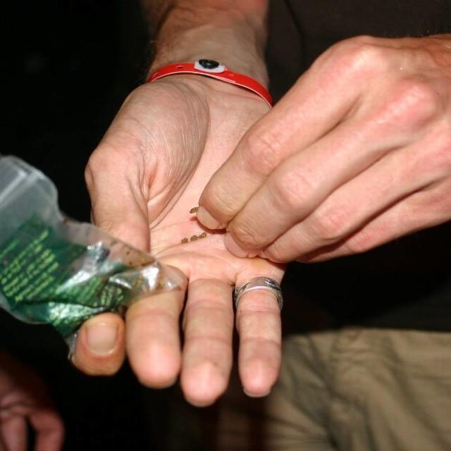 Zatrzymany 18-latek miał przy sobie woreczek z marihuaną. W jego mieszkaniu policjanci znaleźli jeszcze więcej narkotyków.