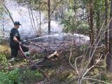 Ogromny pożar lasów na granicy powiatów szydłowieckiego i przysuskiego