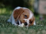 Sklep z karmą i akcesoriami dla psa